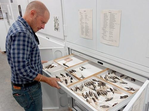 4 Things You Didn't Know About the NCMNS Ornithology Collection