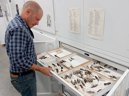 Brian O'Shea, NCMNS Ornithology Collections Manager, looks at a collection of bird specimen