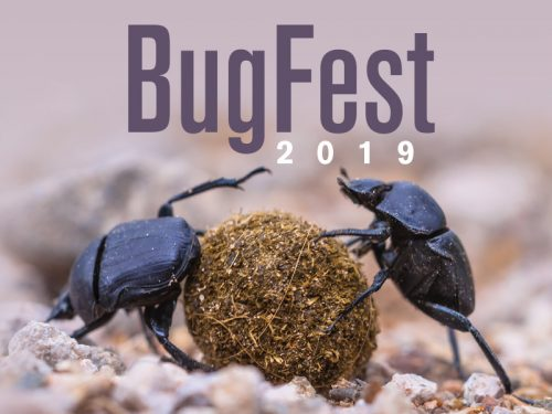 It's the Year of the Dung Beetle at Science Museum's BugFest, Sept. 21