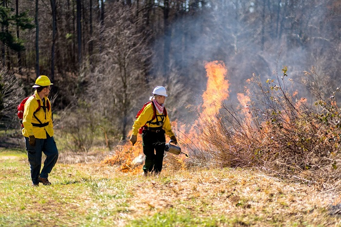 Erin assists a controlled burn at Prairie Ridge in her bright yellow coat.