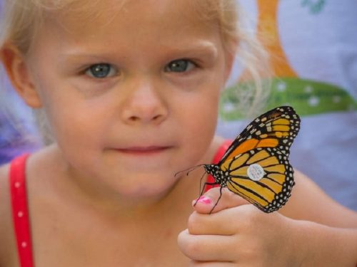 Help the Monarch Butterflies! Here's How.