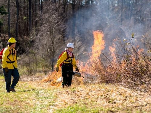 A Fiery Passion: My Experience with Prescribed Burning