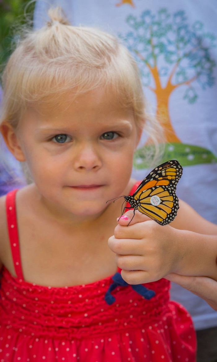 Little girl of about 4 years old with yellow hair and blue eyes holds up a tagged monarch on the tip of her pink-polished thumb.