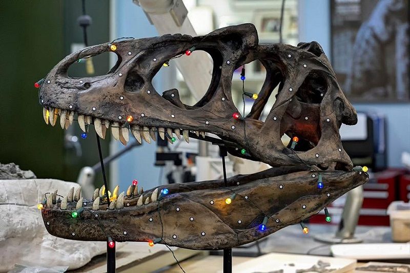 A dinosaur skull is wrapped in colorful lights - red, blue, orange. They glow. How pretty!