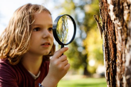 Child with magnifying glass examining tree bark
