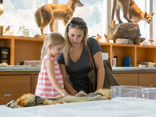Sensory-friendly Mornings in the Naturalist Center