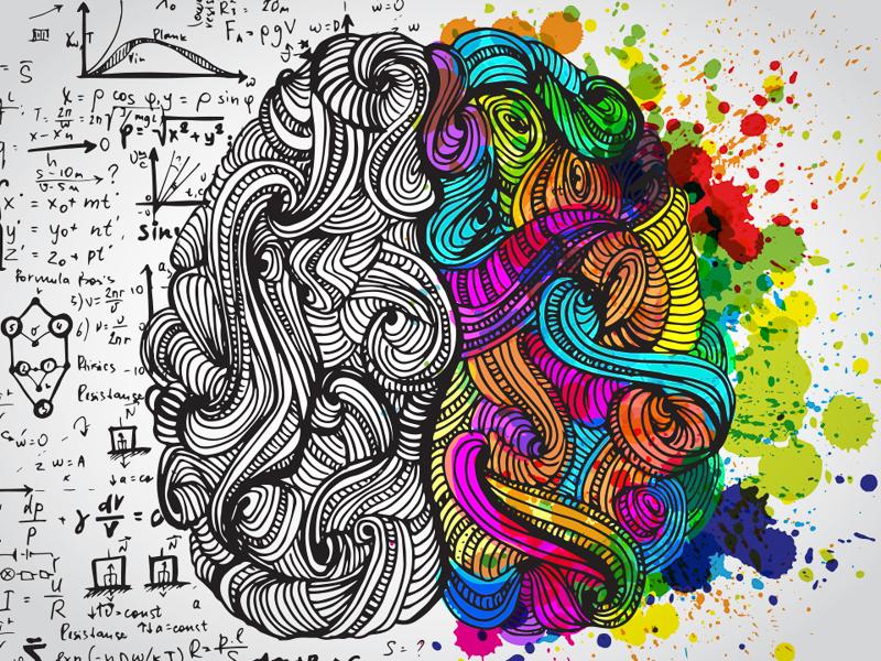 Illustration of half logical brain and half creative brain.