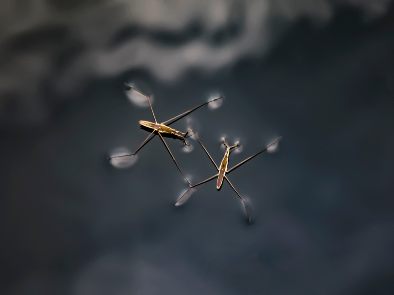 Water striders on water surface. Photo by hao wang on Unsplash.