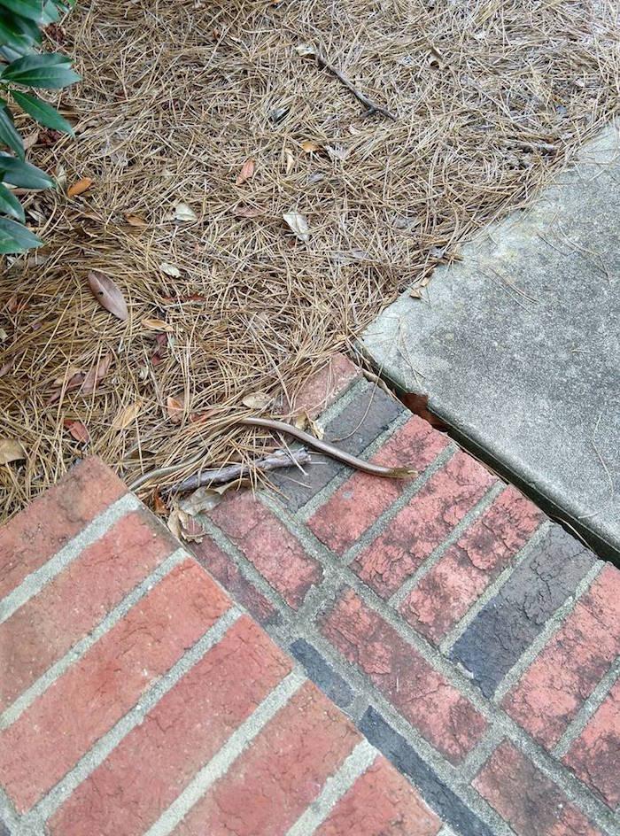 A glass lizard slithers on brick steps.