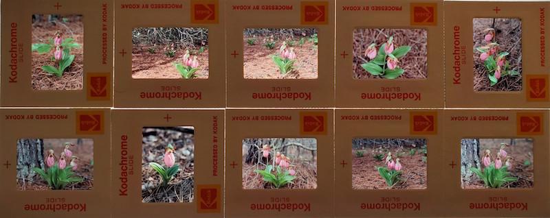 Several photo negatives strung together.
