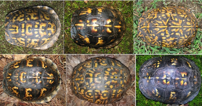 Shell patterns of different turtles.
