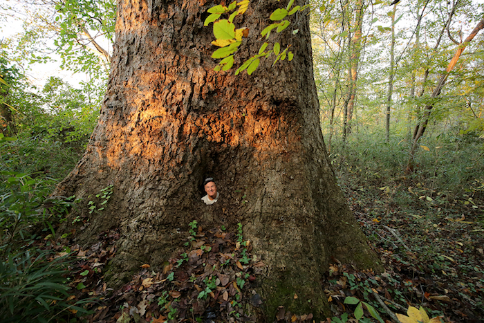 A man peeks out from inside of a tree trunk.