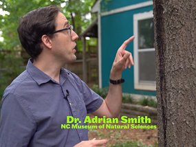 Dr. Adrian Smith and his tree ooze