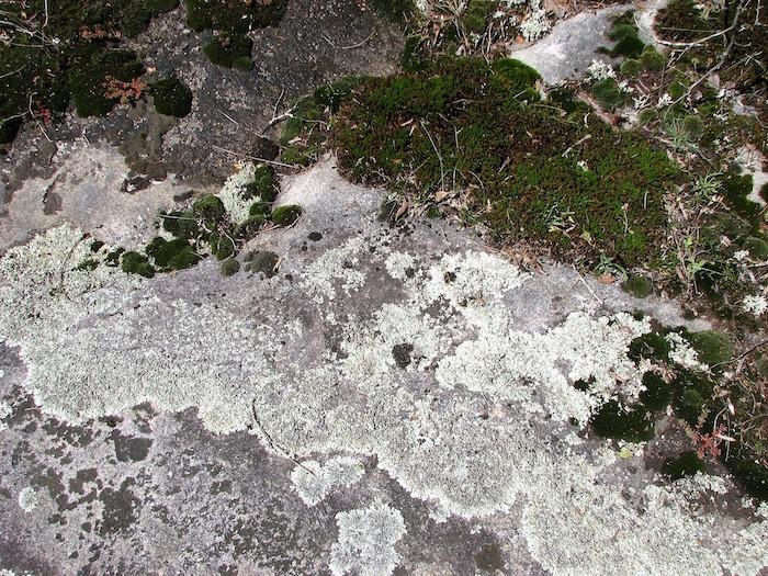 A closeup of lichen and moss cover granite.