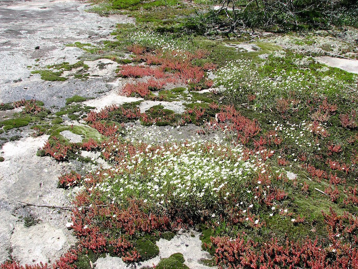 A myriad of different mosses and plants cover a granite ground.