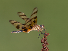 Dragonfly by Mike Dunn.