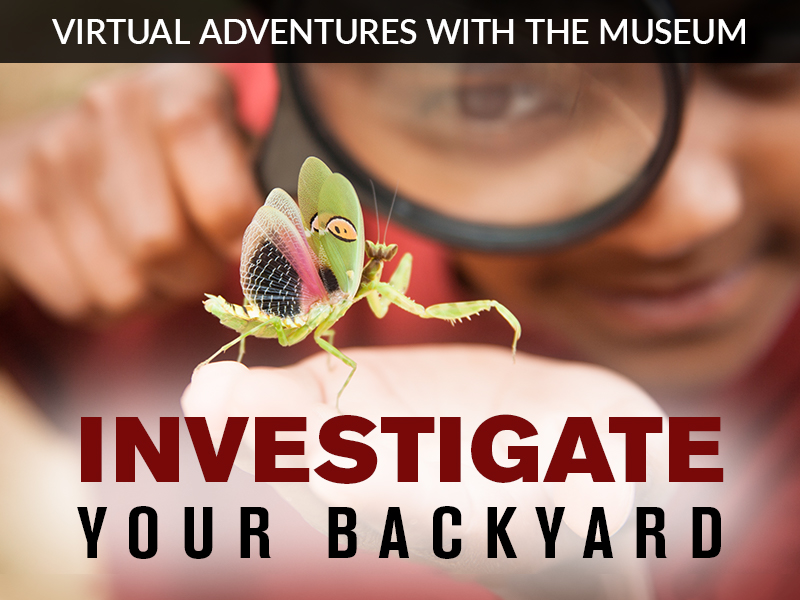 Investigate Your Backyard