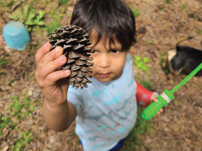 Child holding a pine cone.
