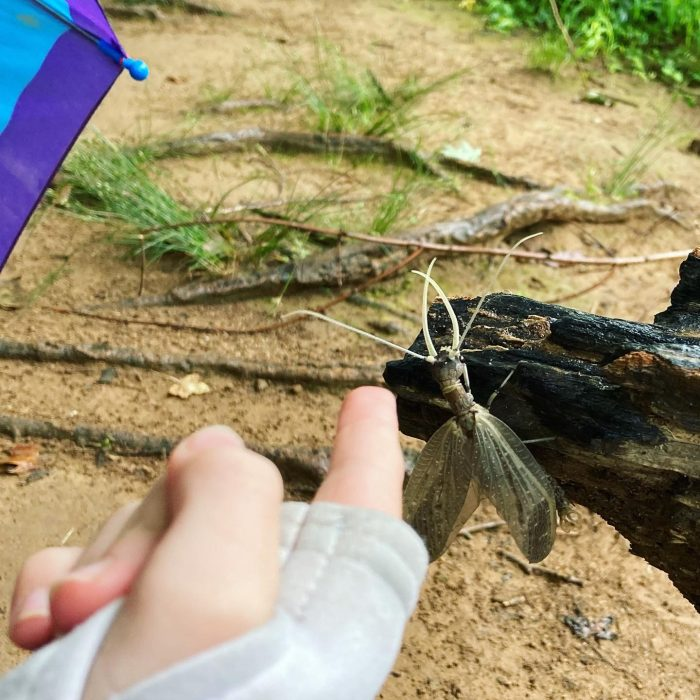 Someone shows their finger for scale next to a dobfly.