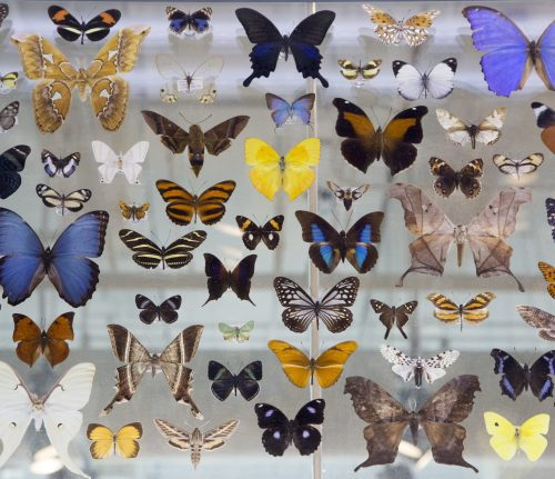 A colorful butterfly collection