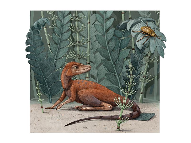 Kongonaphon kely illustration. Credit: Proceedings of the National Academy of Sciences (PNAS)