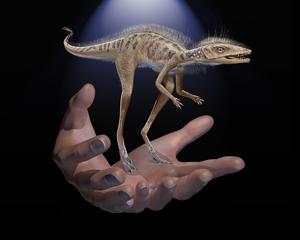 Kongonaphon to scale. Credit: American Museum of Natural History (AMNH).
