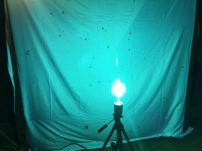 A moth light burns a cool blue against a white tarp.