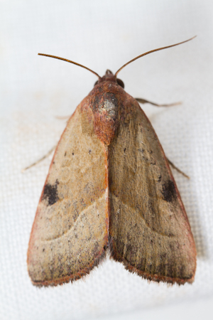 A spotted moth with slender wings hangs on a wall.