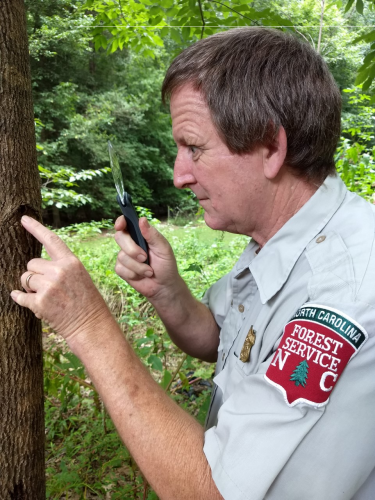 A man looking at a tree with a magnifying glass