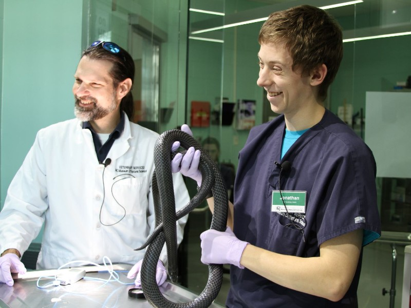 Jonathan holding a black milksnake in the Vet window with Dr. Dan next to him in lab coat.