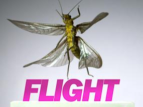 Flight video cover image