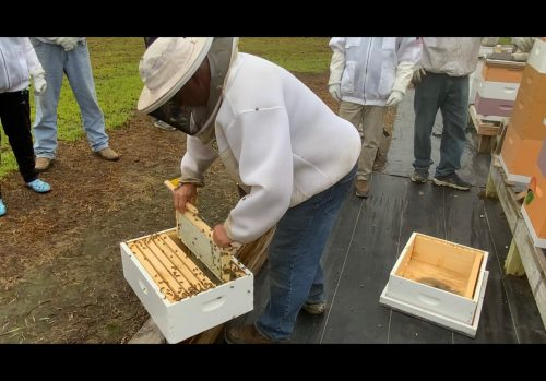 A beekeeper getting honey out of a beehive
