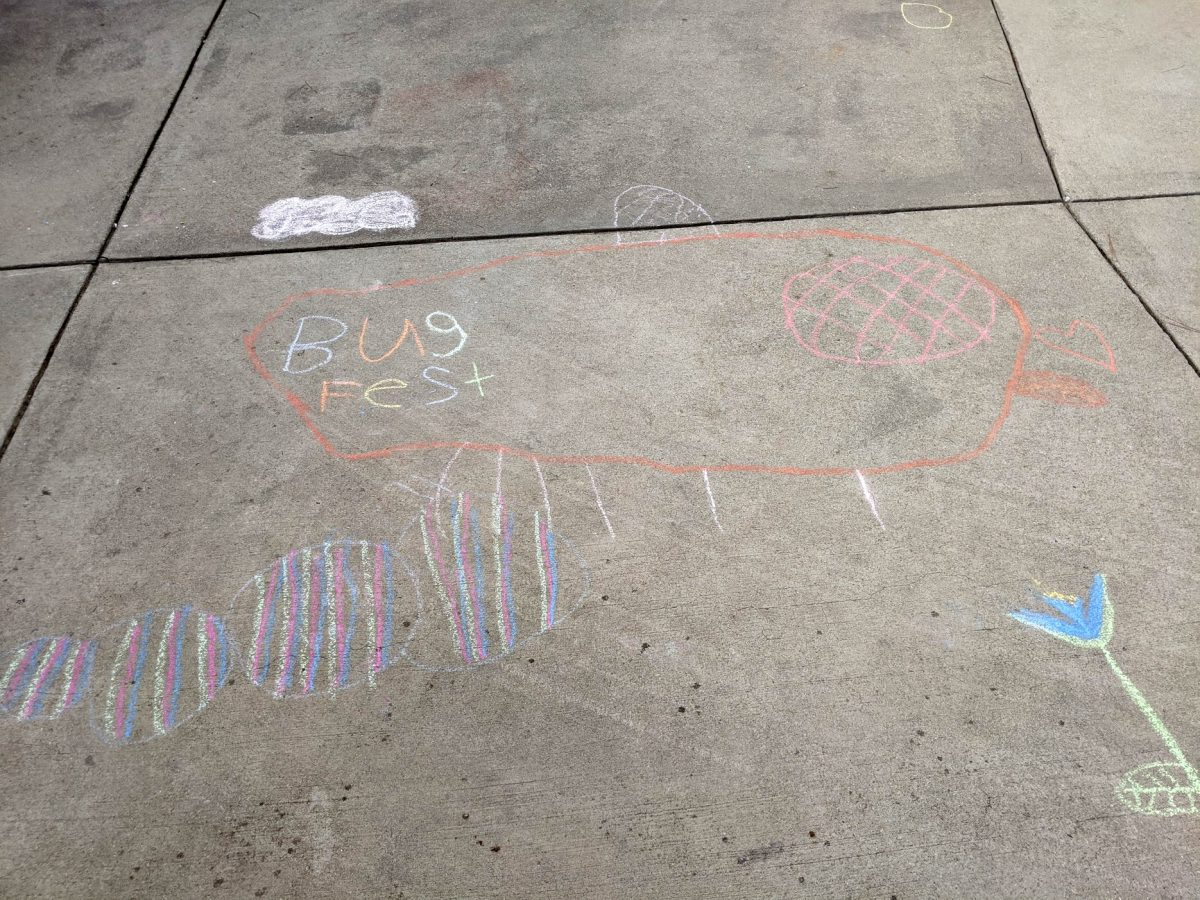 bugfest and a striped caterpillar in chalk
