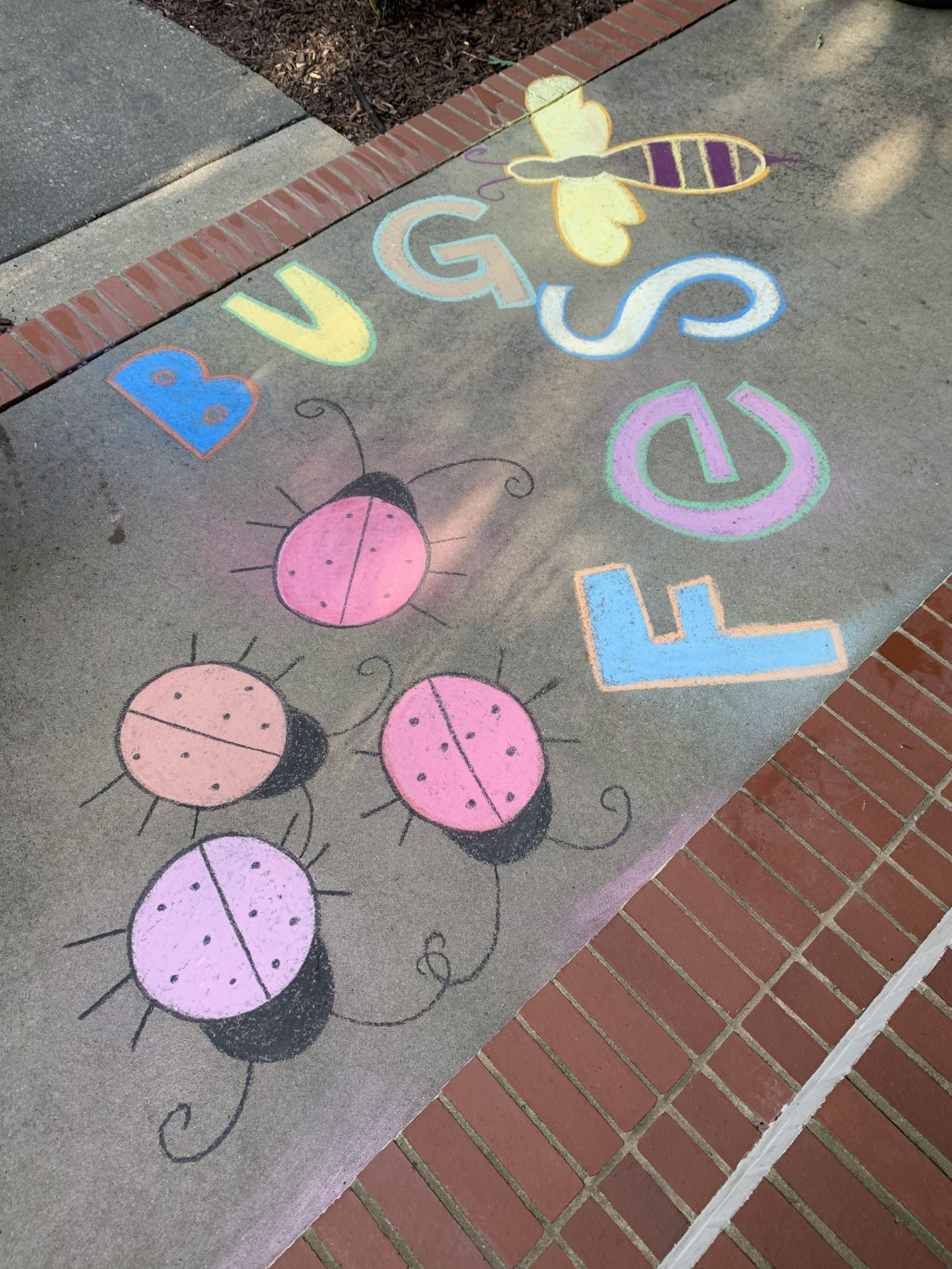 Chalk bugfest and four chalk ladybugs