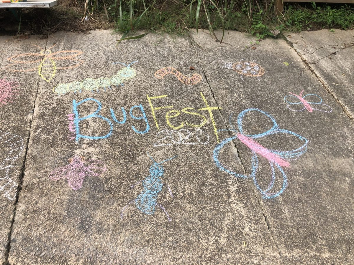 Chalk BugFest and an assortment of chalk bugs