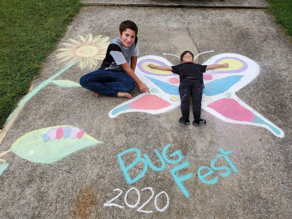 Two little boys and butterfly life cycle in chalk
