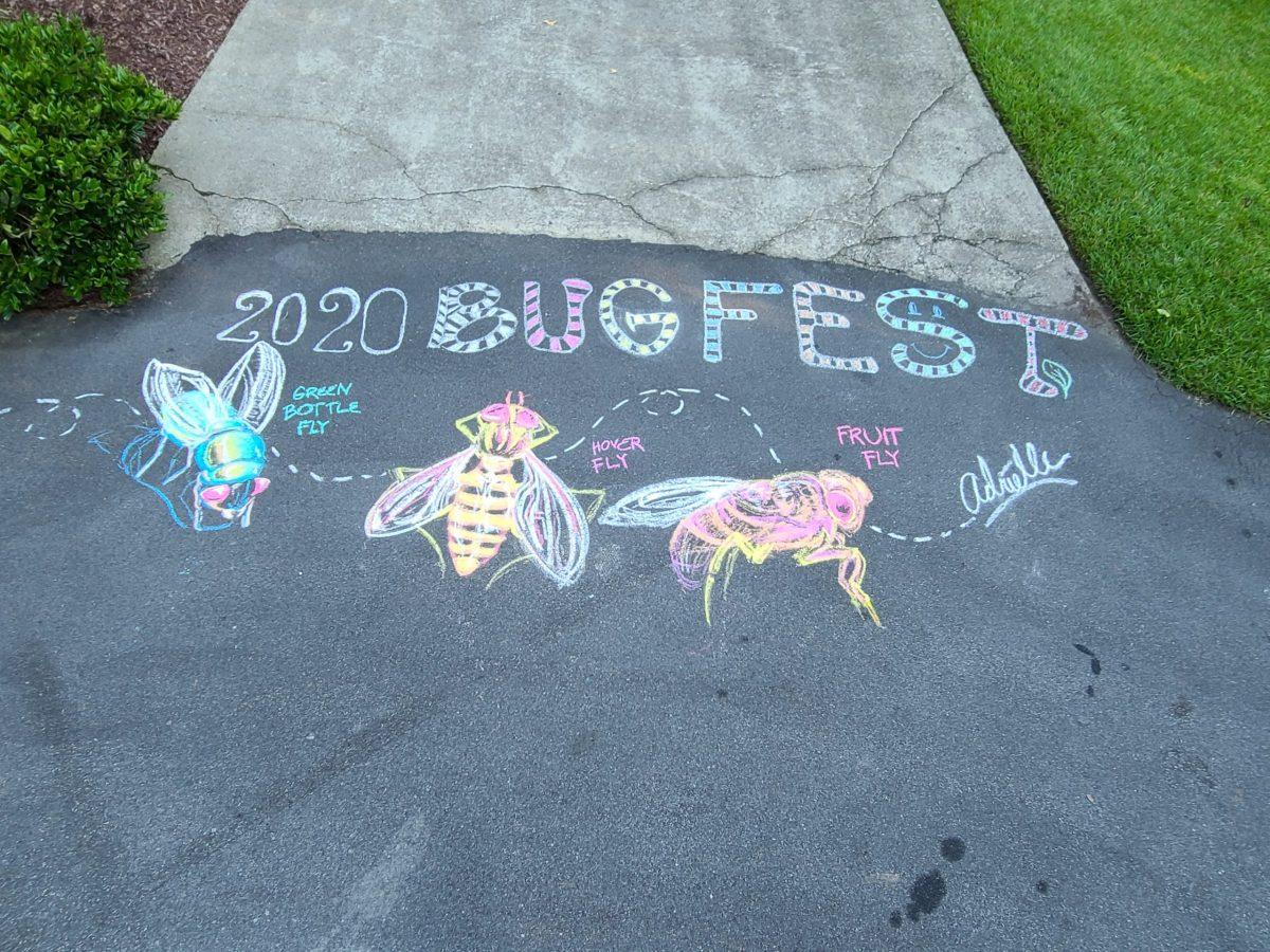 Three chalk flies for BugFest