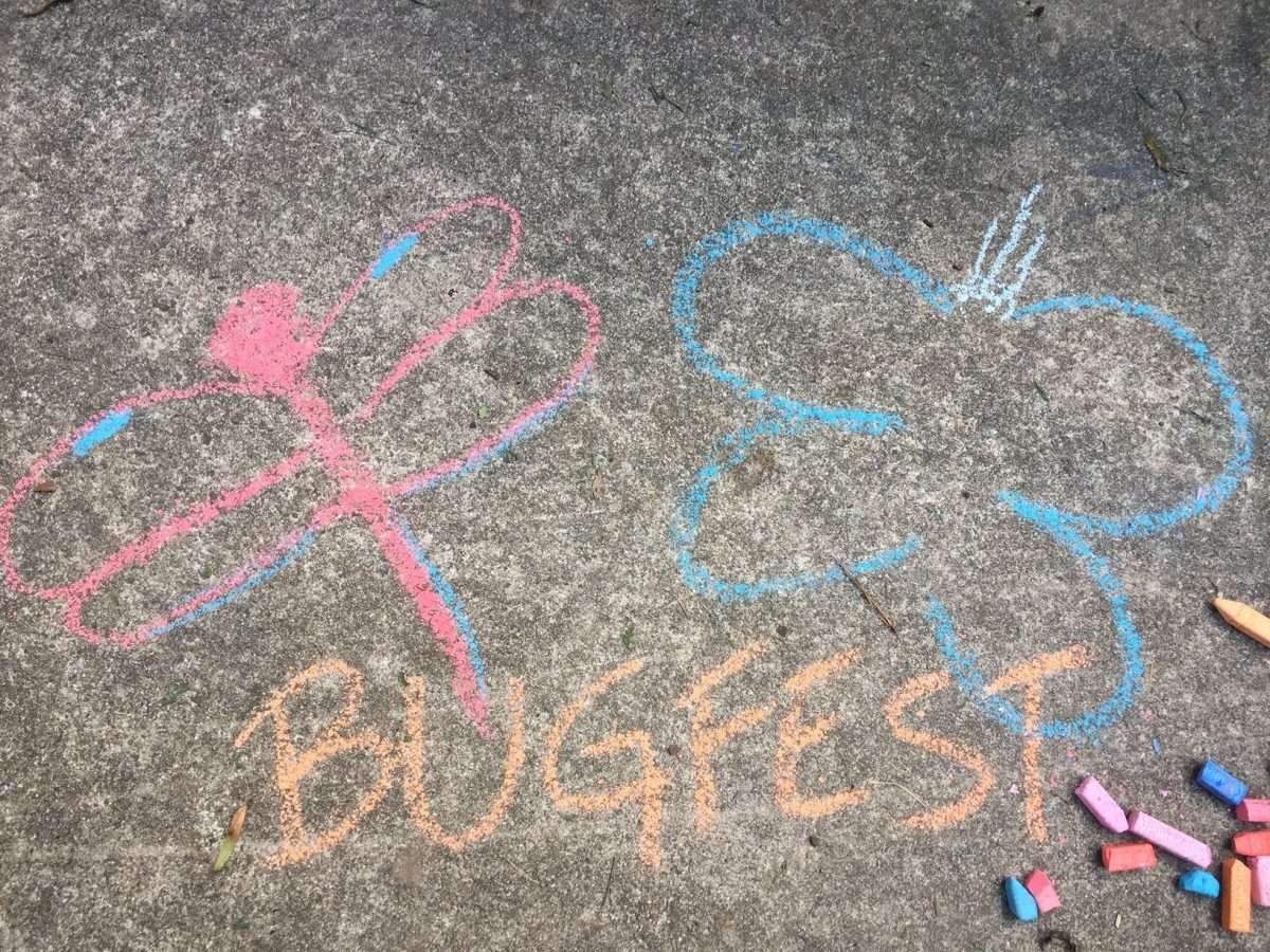 BugFest and a chalk dragonfly and butterfly