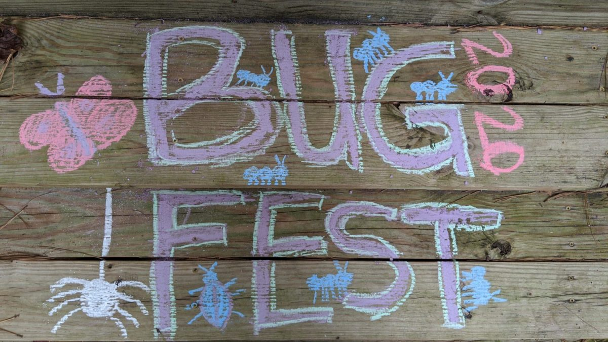 BugFest will little bugs in chalk on wood