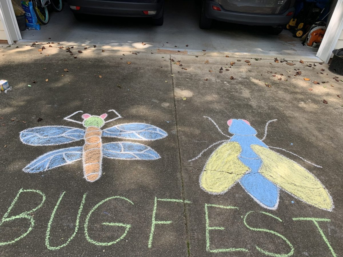 a chalk fly and dragonfly and bugfest
