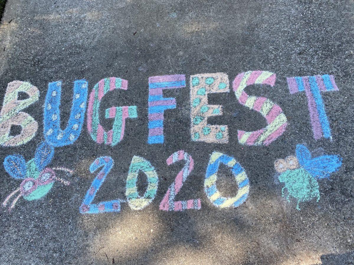 BugFest 2020 in Chalk