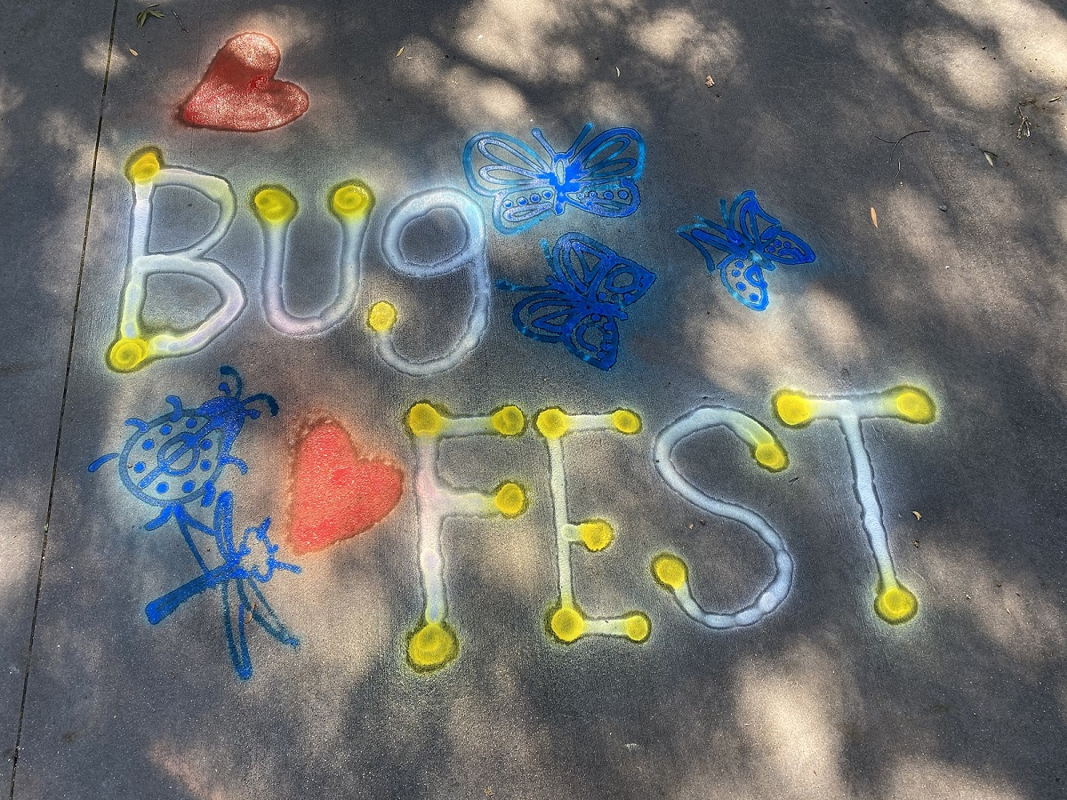BugFest in blue and red