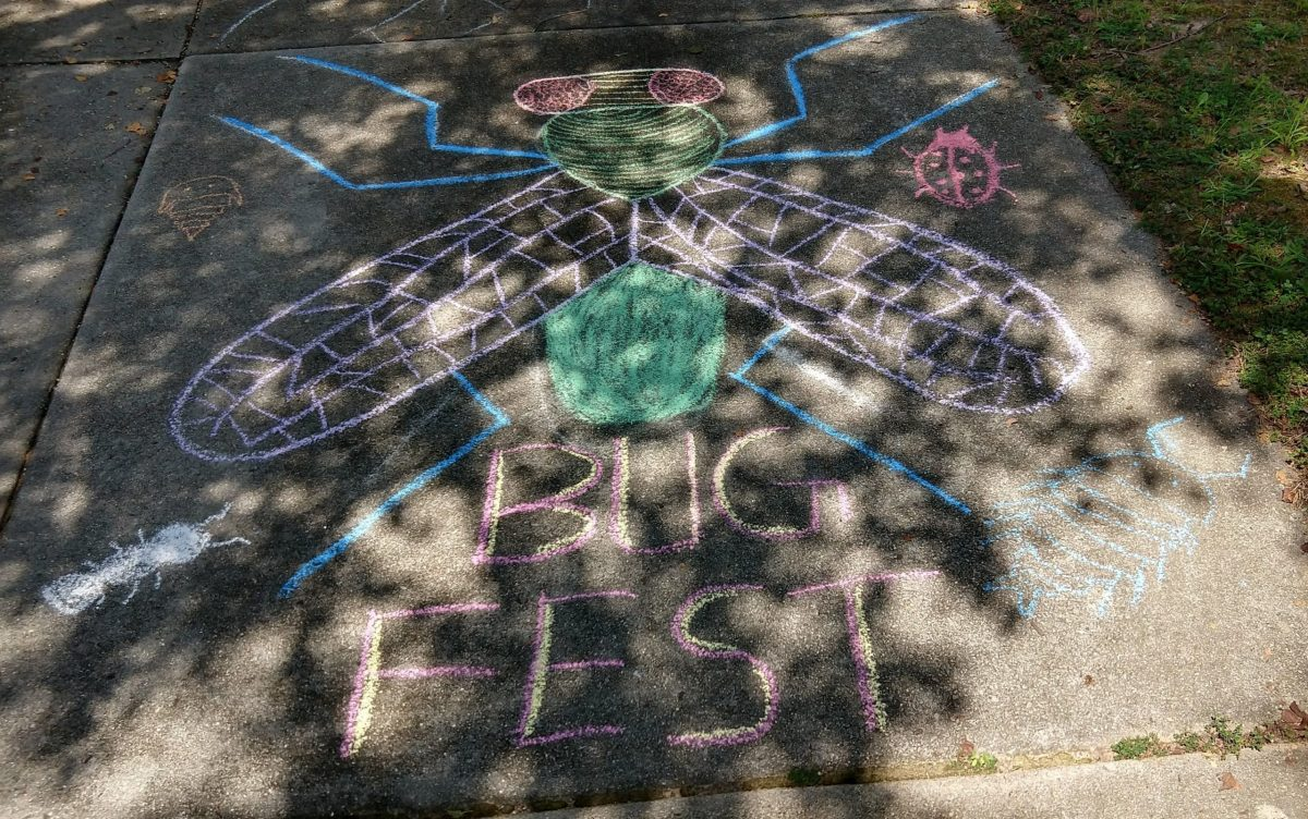 BugFest and a Fly out of chalk