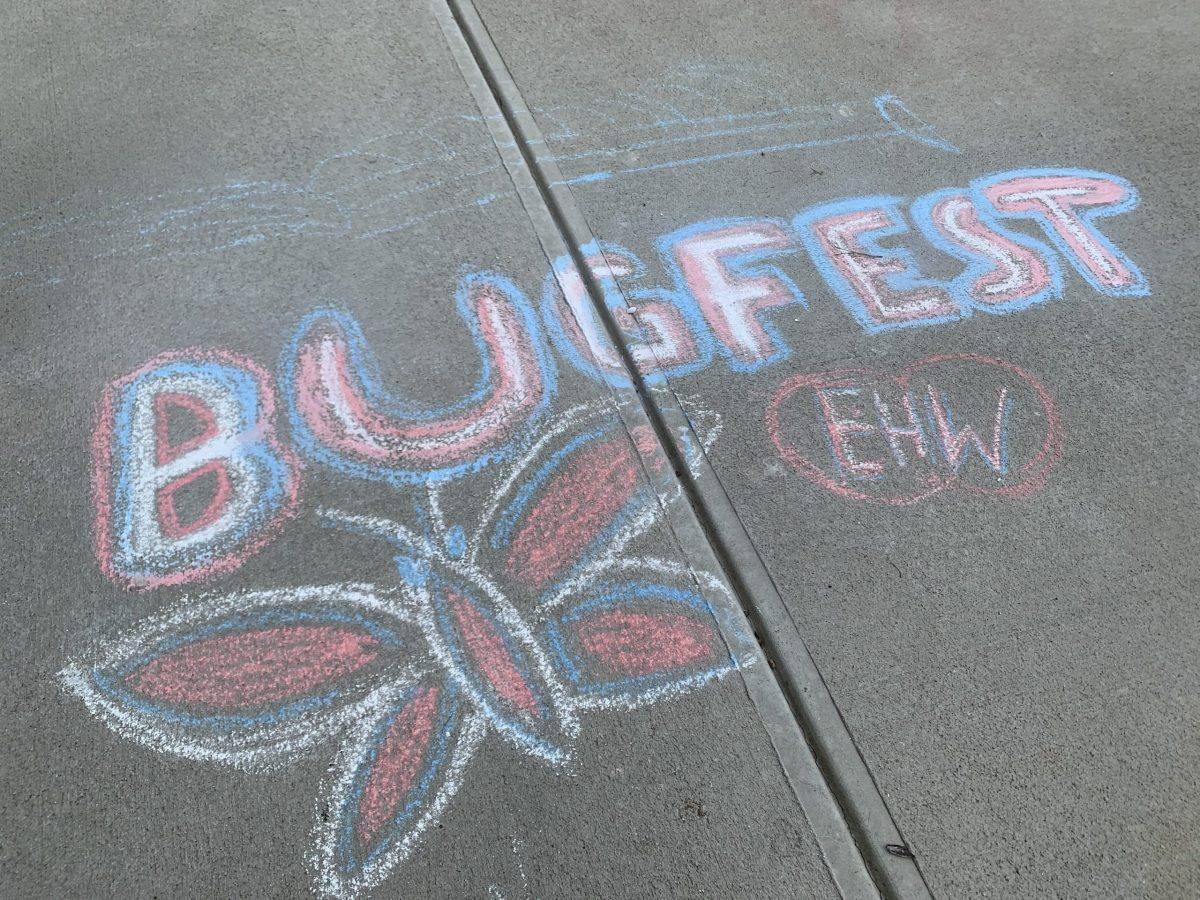 A chalk bugfest with a butterfly