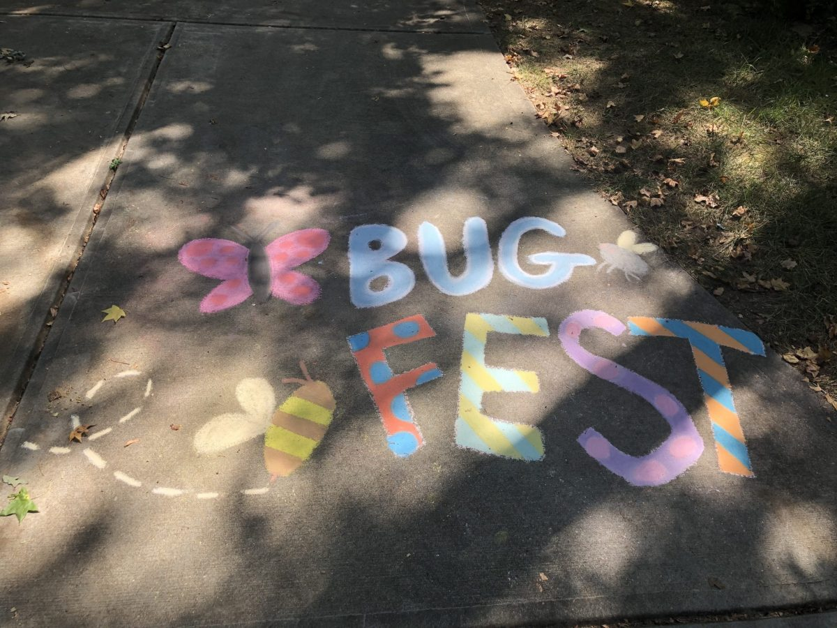 BugFest in chalk with butterflies