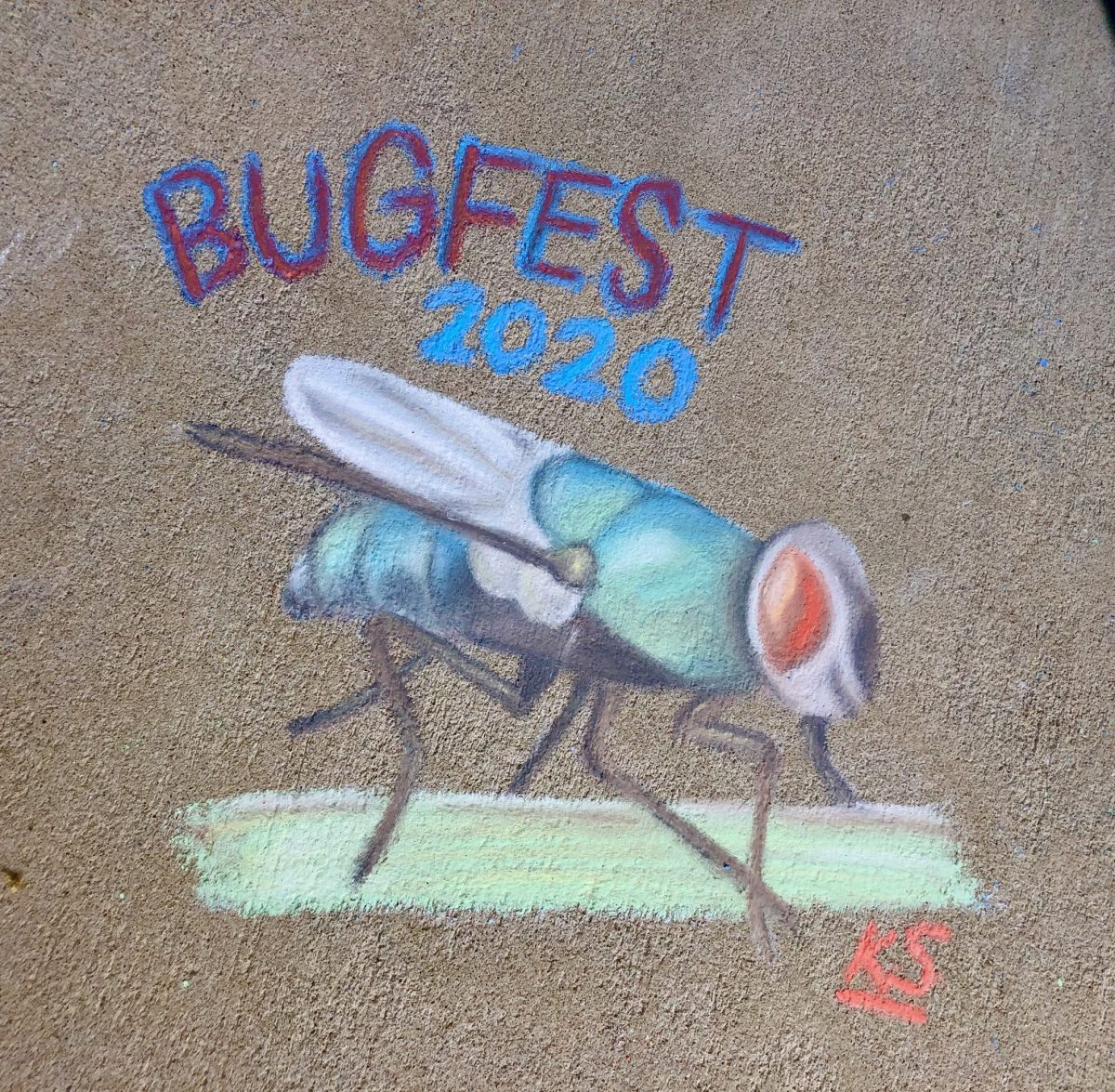 A detailed BugFest fly in chalk
