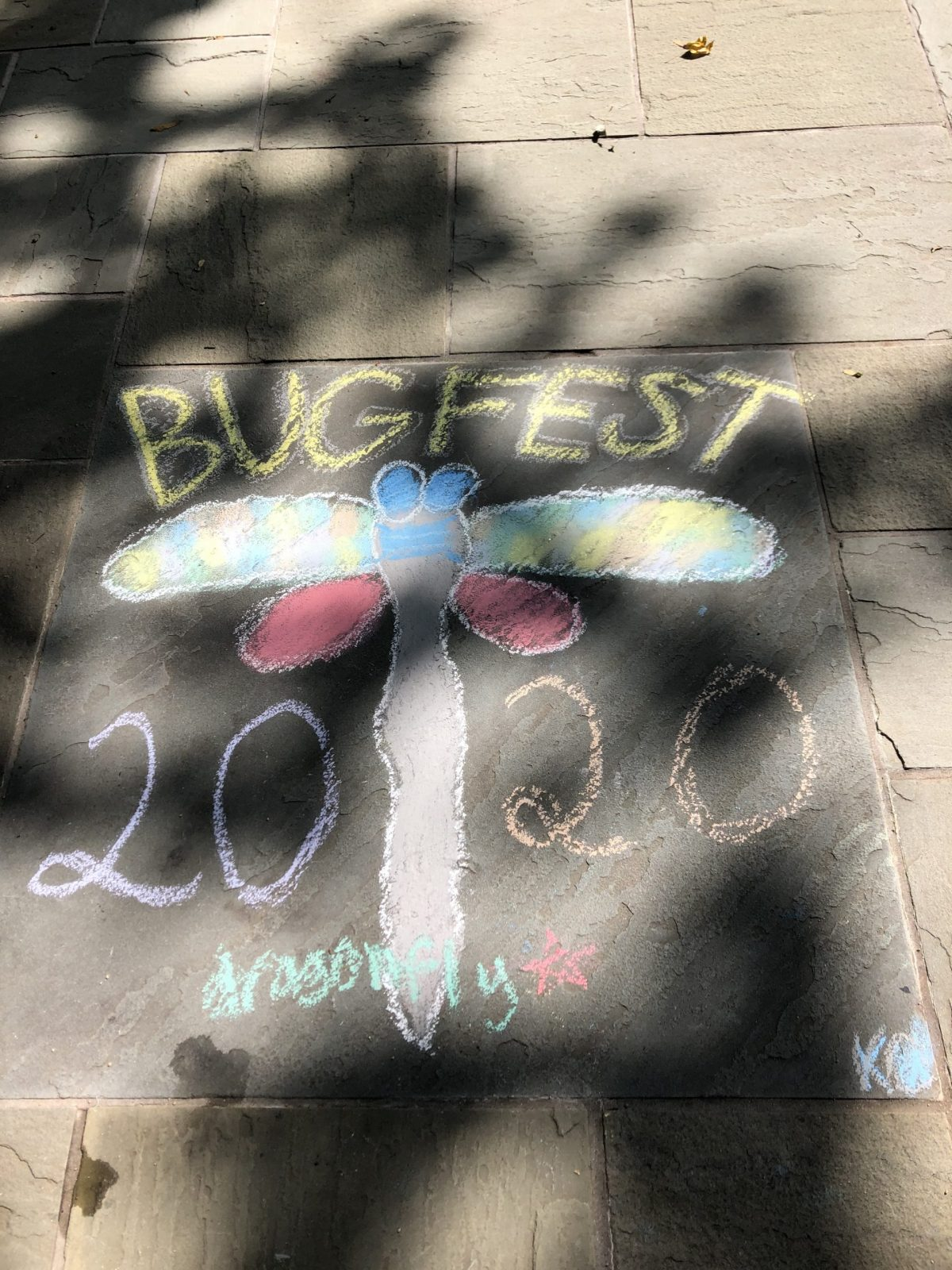 bugfest 2020 and a dragonfly