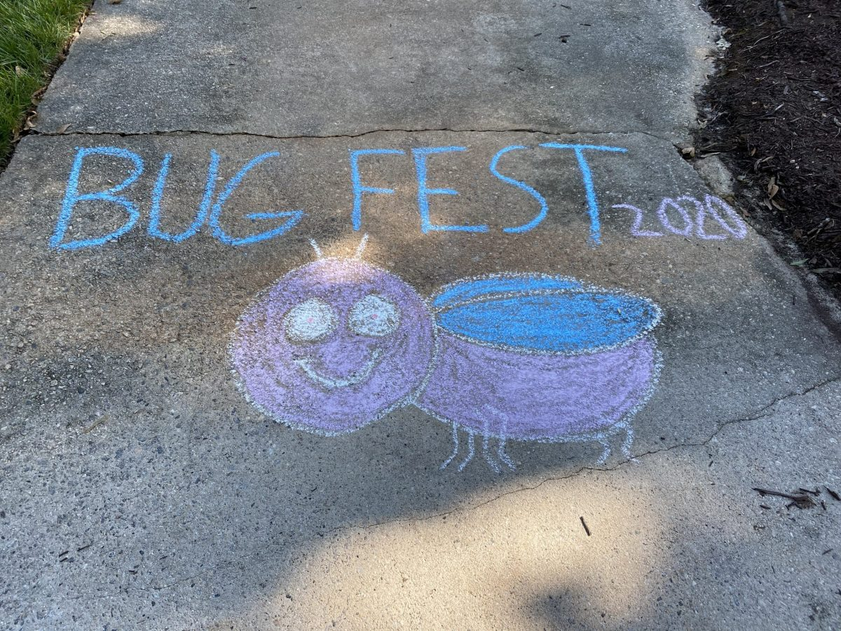BugFest in Chalk with a Fat Bug