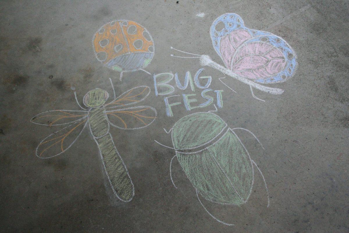 Chalk bugs