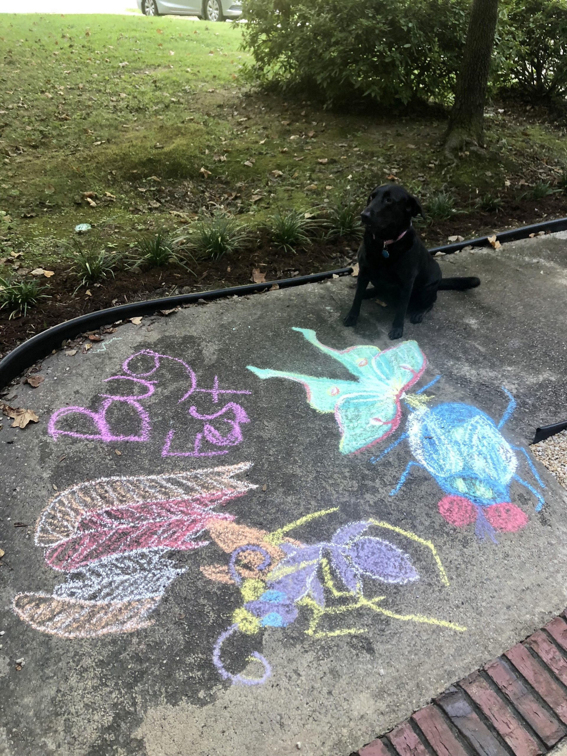 BugFest chalk art and Orchid the dog